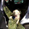 Гамак трансформер для перевозки собак